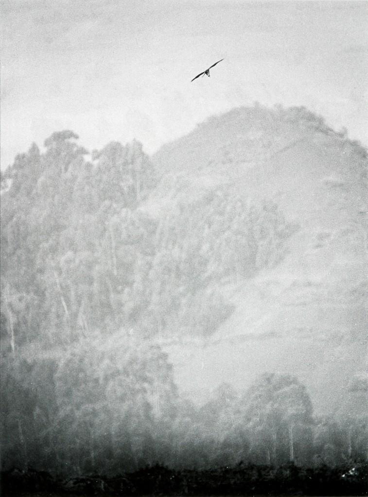 Looking Towards by Padraig Grant