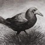 Crow by Paddy Darigan